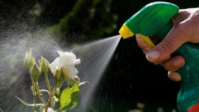 Pourquoi bannir les produits chimiques de son jardin ?